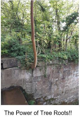 Tree roots damaging havannah weir